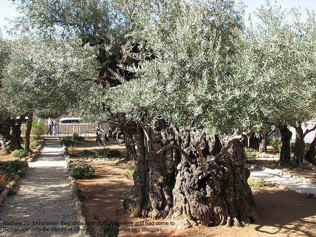 Mt._Olives